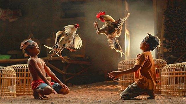 Bandar Judi S128 Sabung Ayam Online Terpercaya